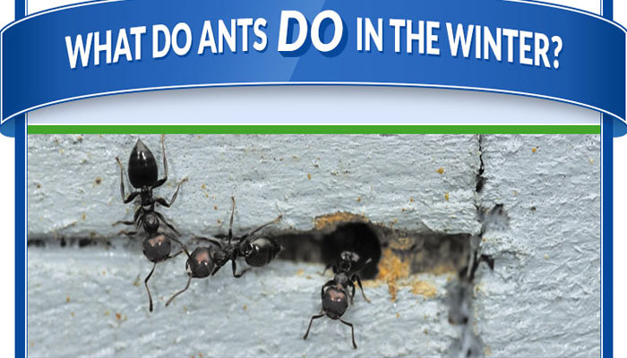 Preferred Pest Control Ants in the Winter