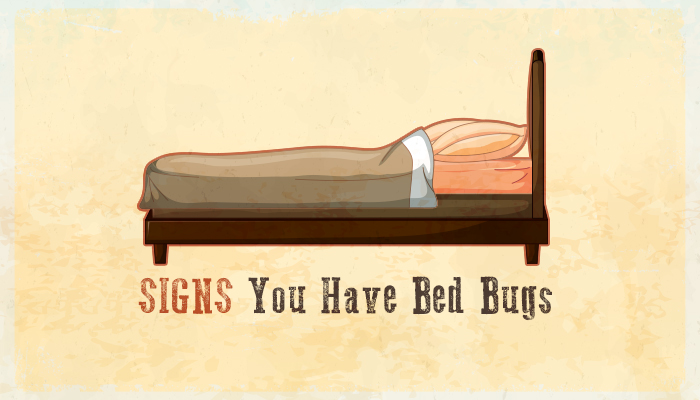 beware! bed bug season is here (infographic)