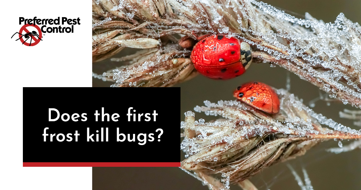 does the first frost kill bugs.