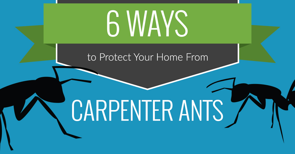 Des Moines Carpenter Ant Removal
