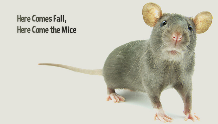 Preferred Pest Control Fall Mice
