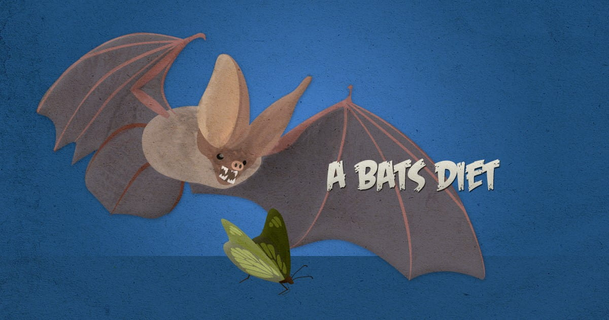 what do bats eat