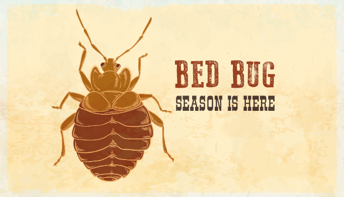 bed bug season