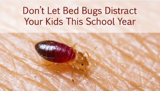 Preferred Pest Control Bed Bug Removal