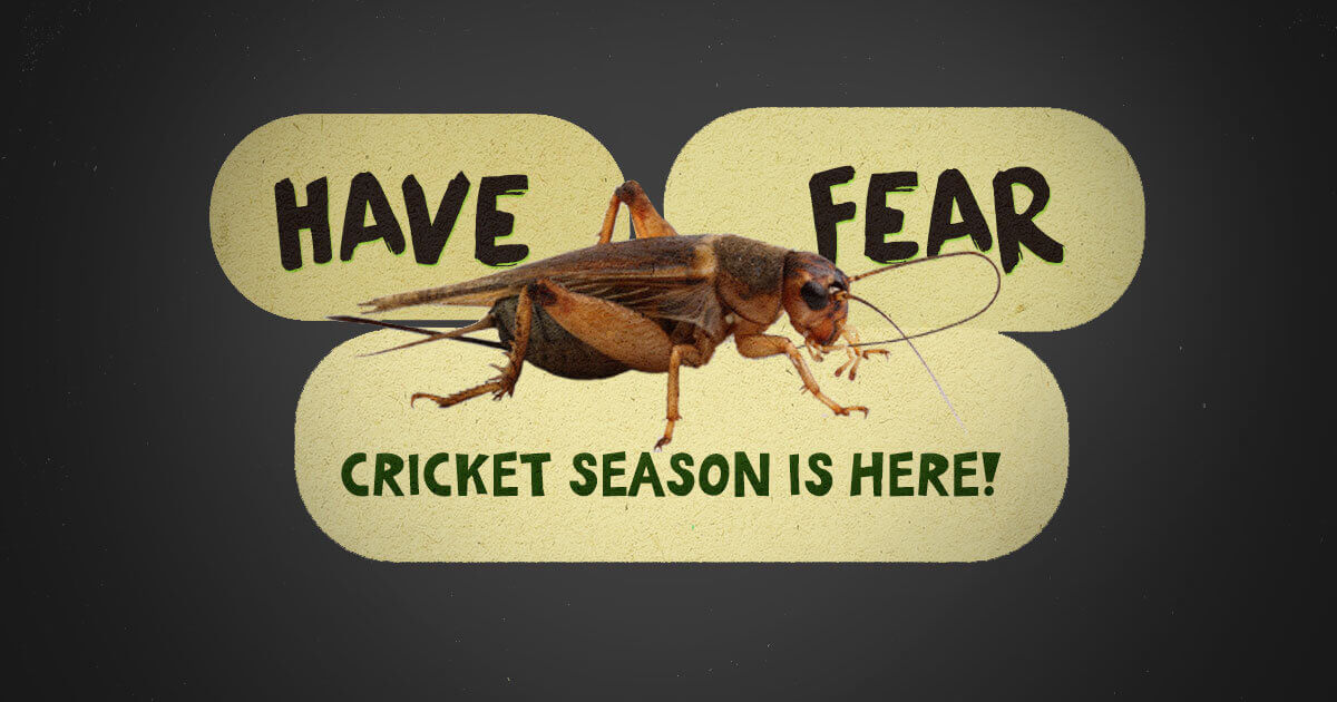 Preferred Pest Control Cricket Season