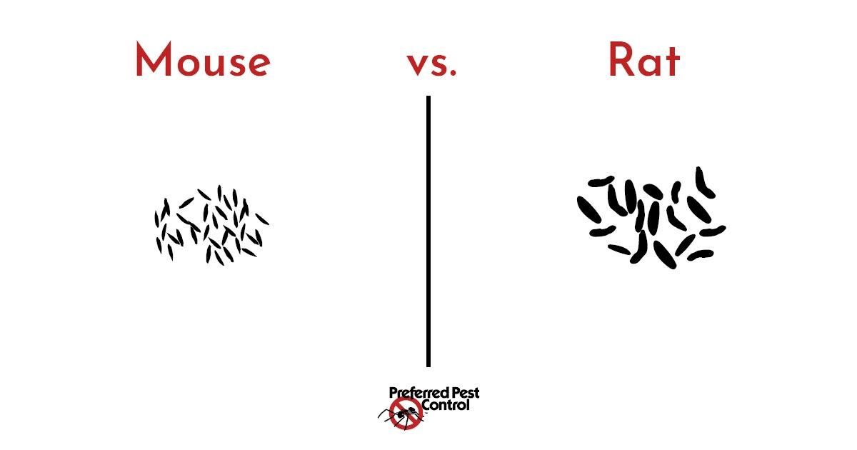 difference between mice and rat poop.