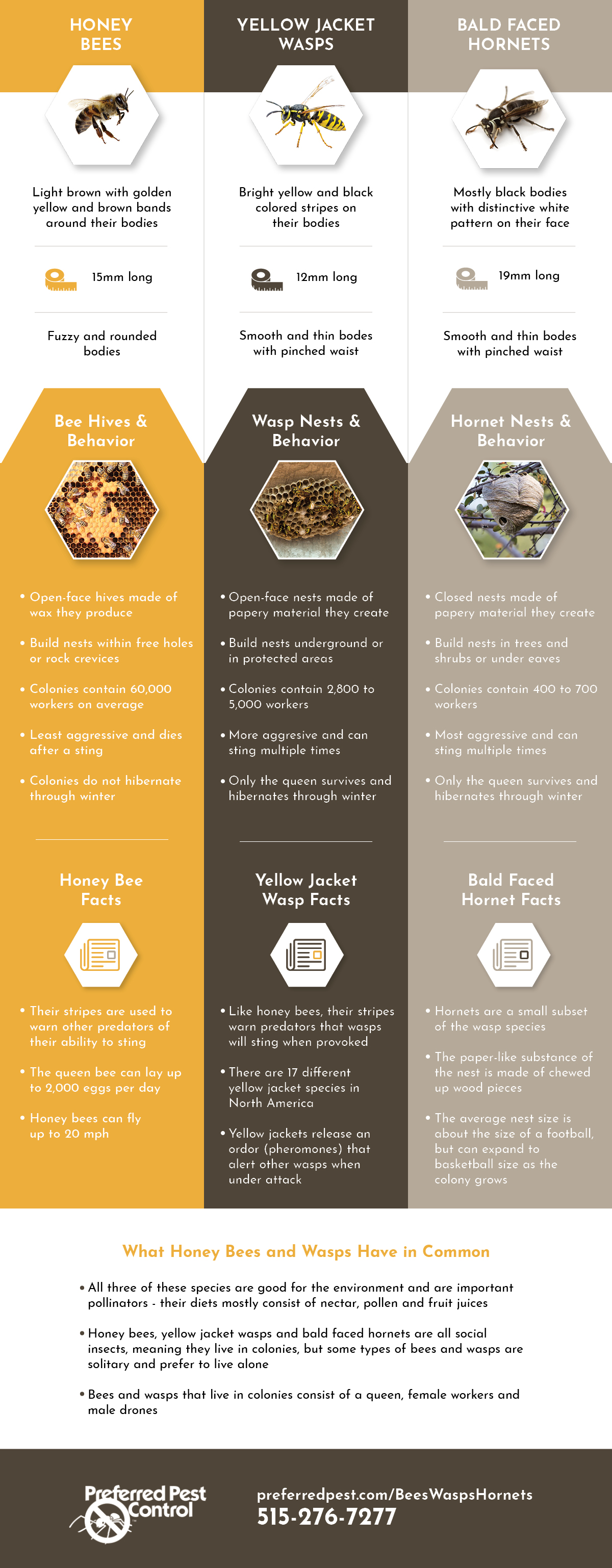 difference between bees wasps and hornets.