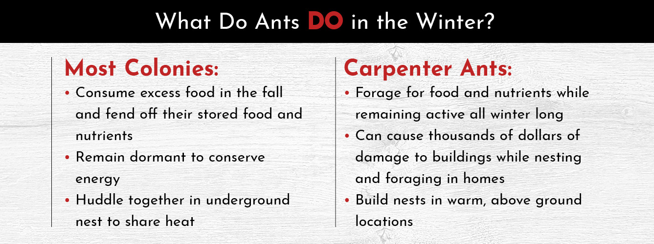 can you get ants in the winter.