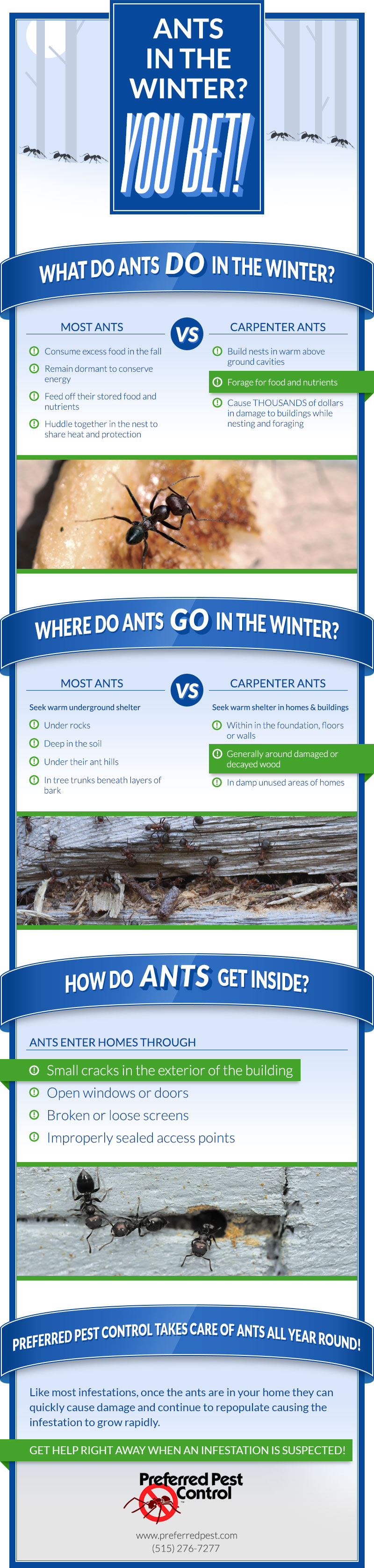 Preferred Pest Control Winter Ants