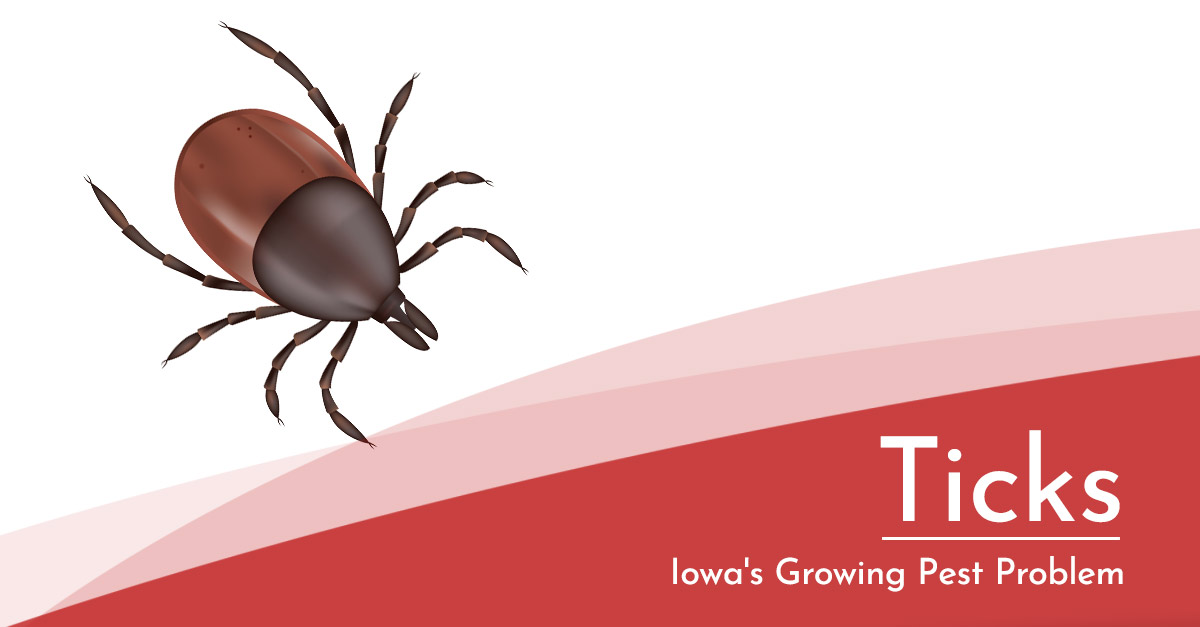 Beware of Tick Bites and the Diseases They Can Cause