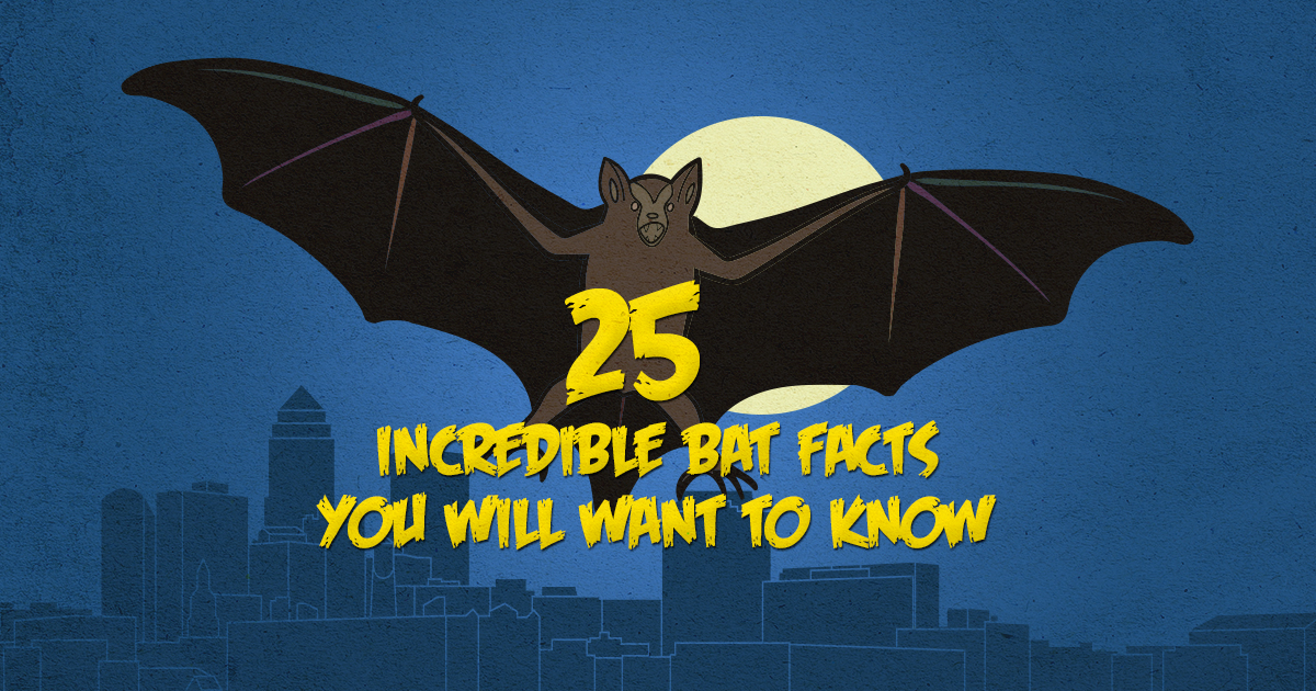 Preferred Pest Control Bat Facts