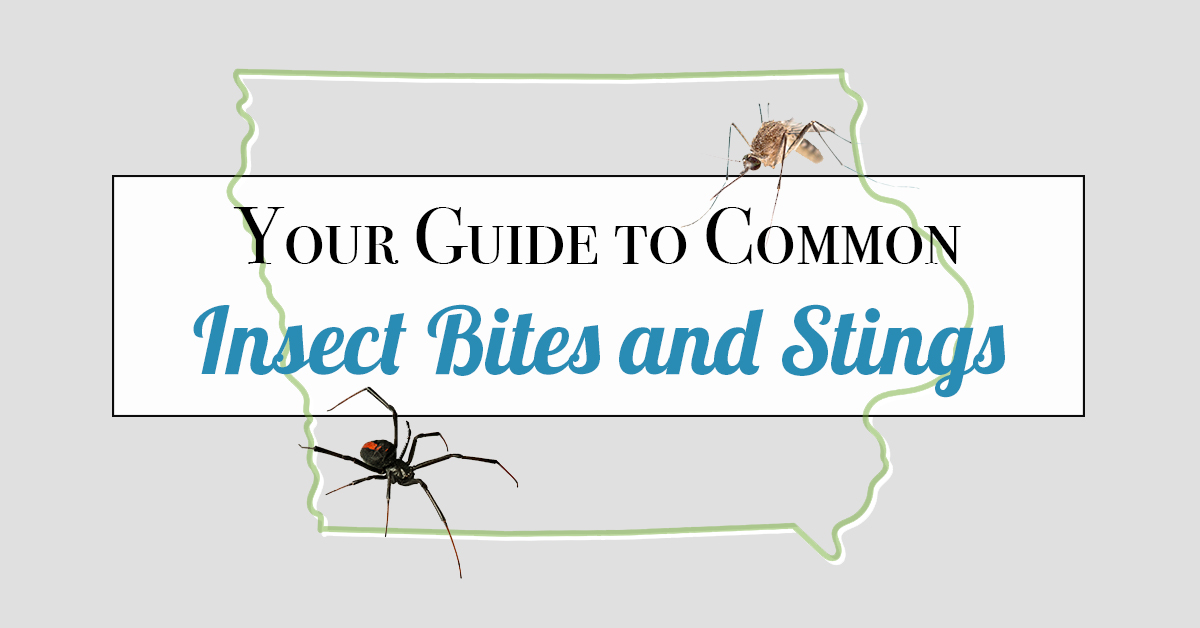 Your Guide to Common Insect Bites and Stings