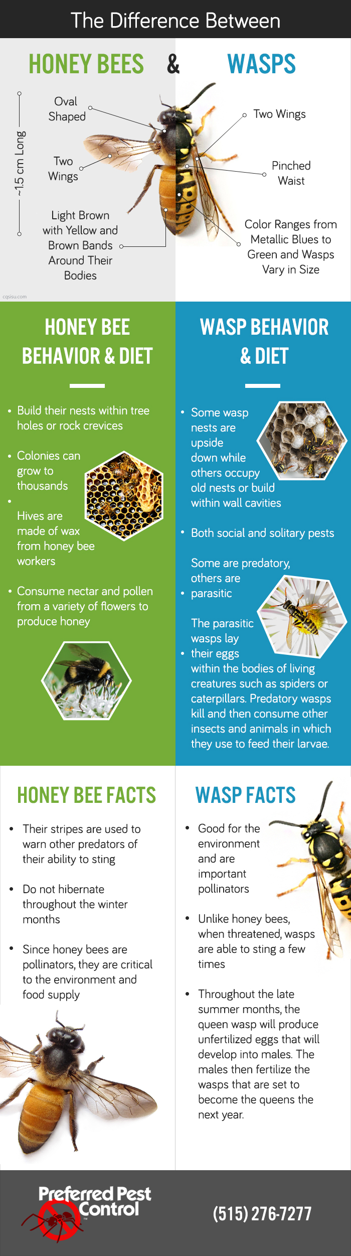 The Difference Between Honey Bees and Wasps
