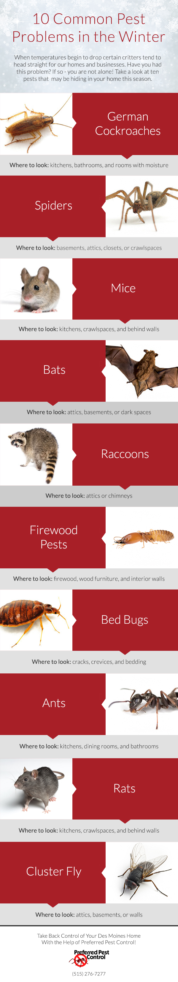 10 Common Pest Problems During the Winter
