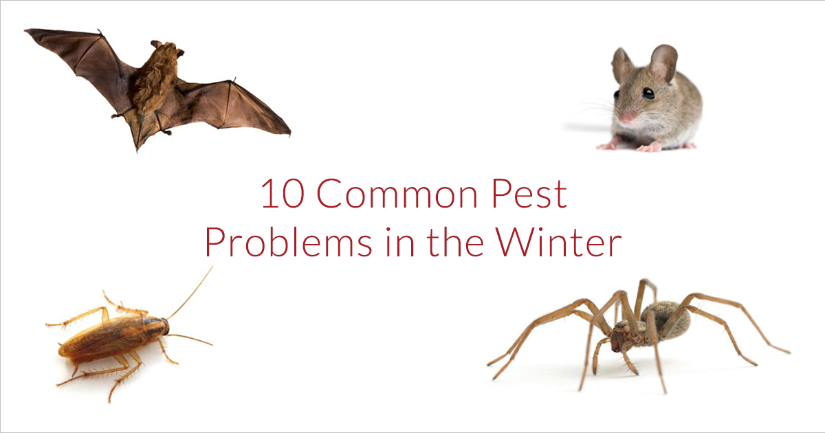 common winter pests in iowa