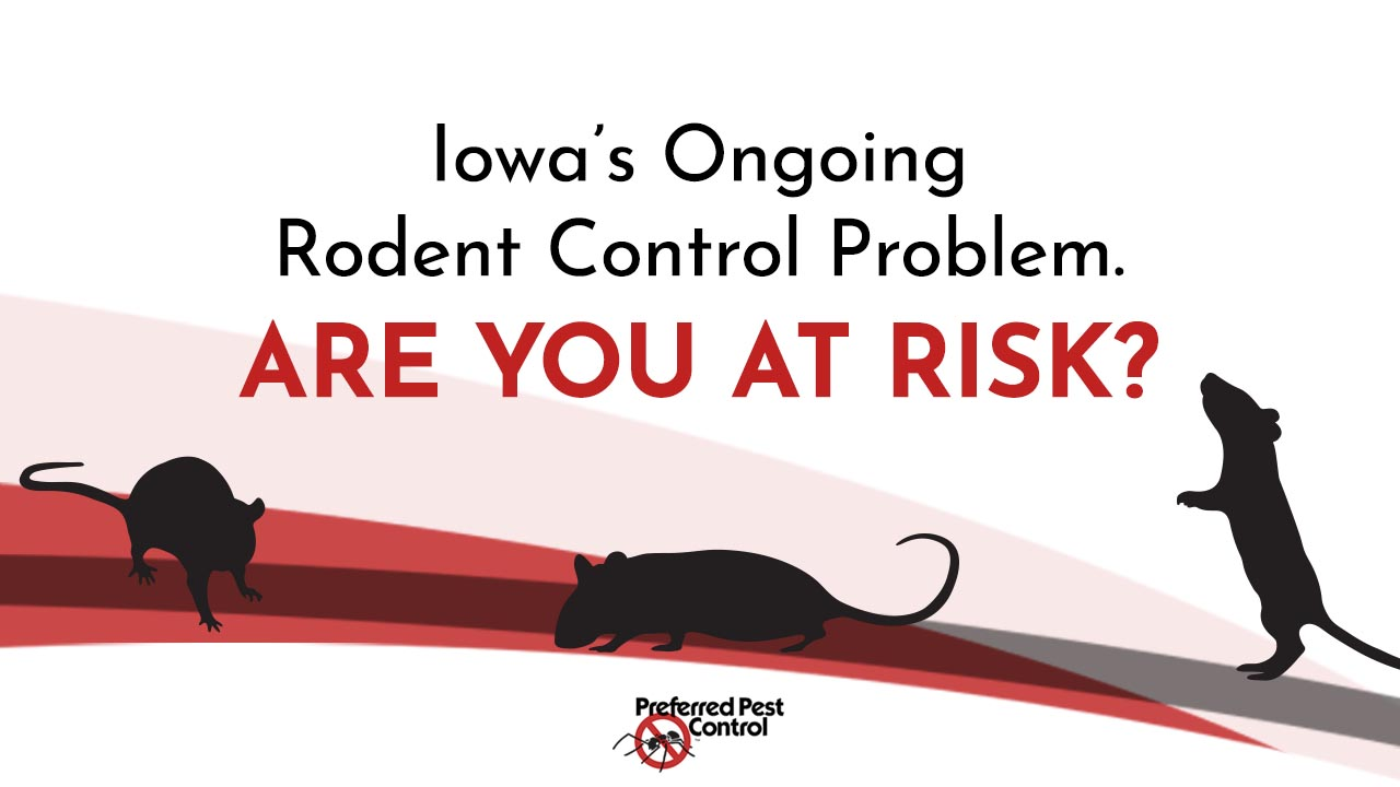 Central Iowa's Ongoing Rodent Problem