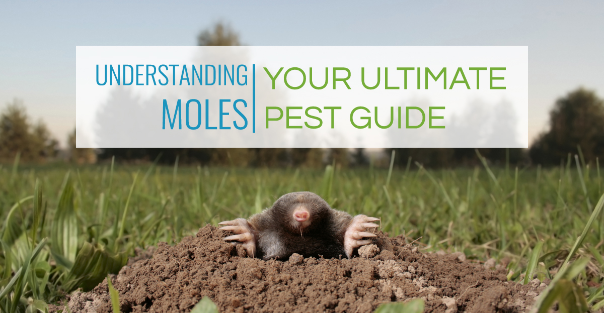 Understanding Moles | Your Ultimate Pest Guide