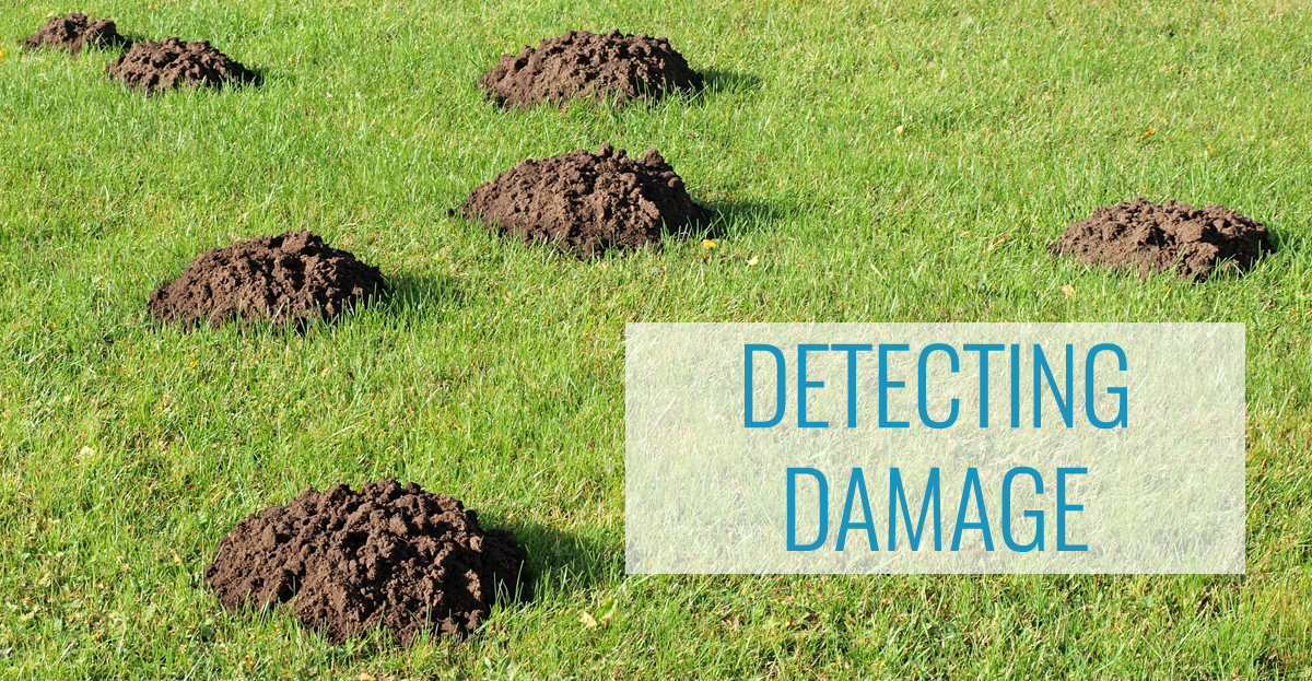 Mole Detection