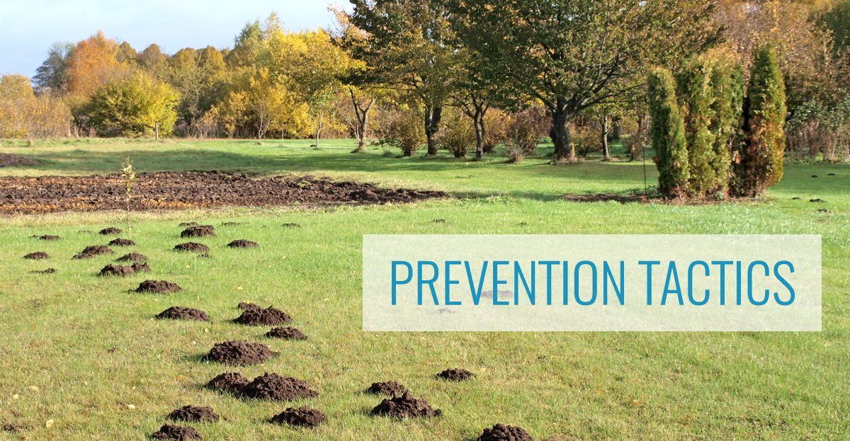 Mole Prevention Tactics