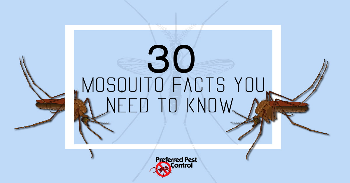 30 Mosquito Facts You Need to Know