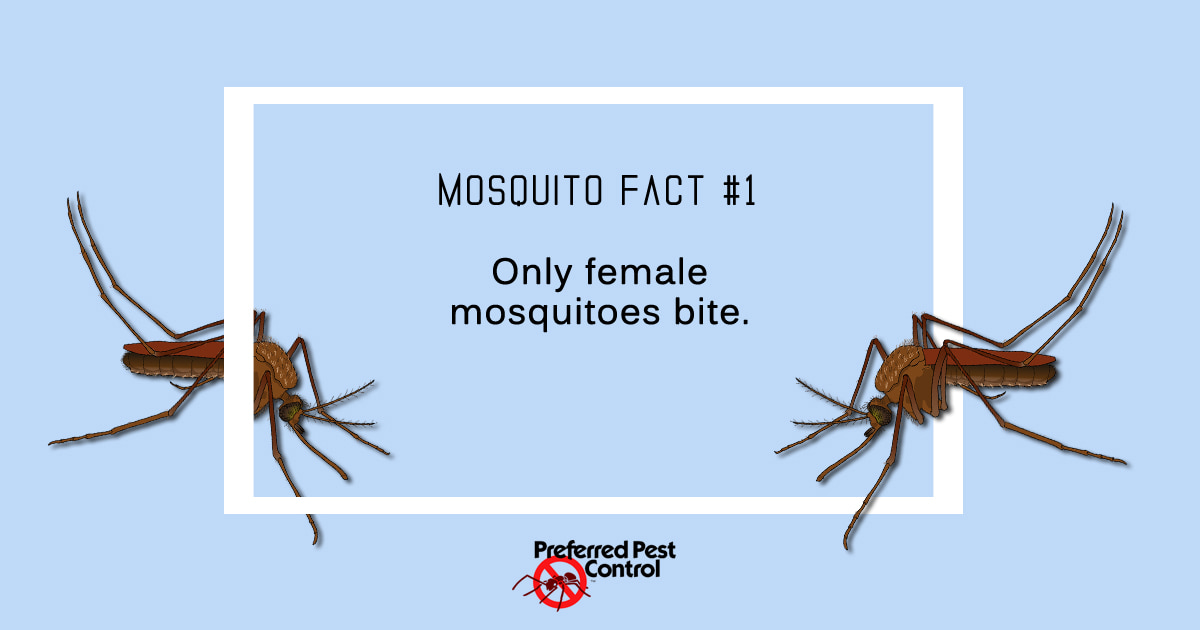Mosquito Facts | Preferred Pest