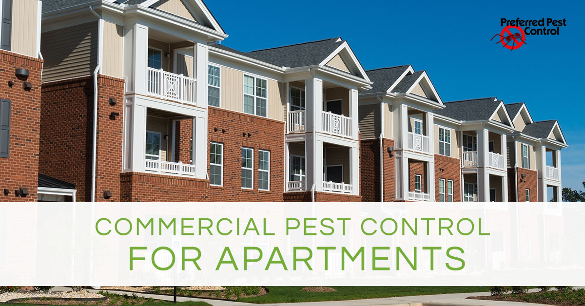 commercial pest control | pest control for apartments