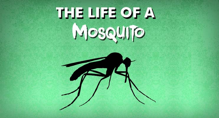 Preferred Pest Control, Tips to Win the War Against Iowa's Mosquitoes