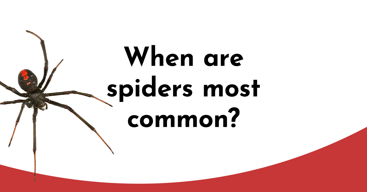 spider-facts-5