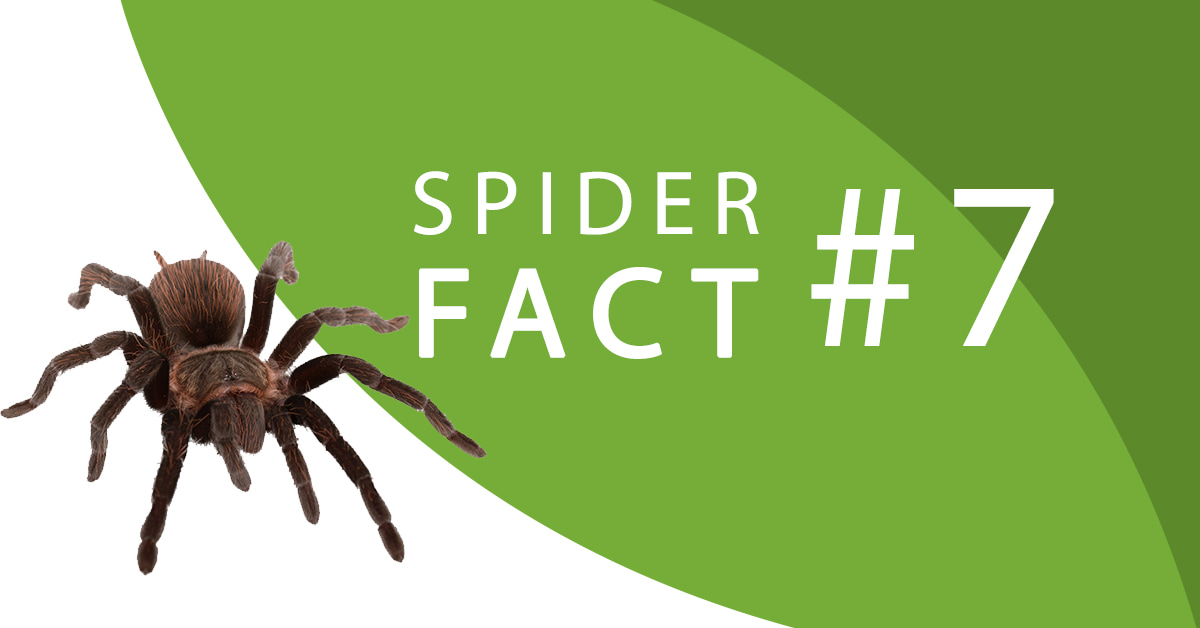 spider-facts-seven