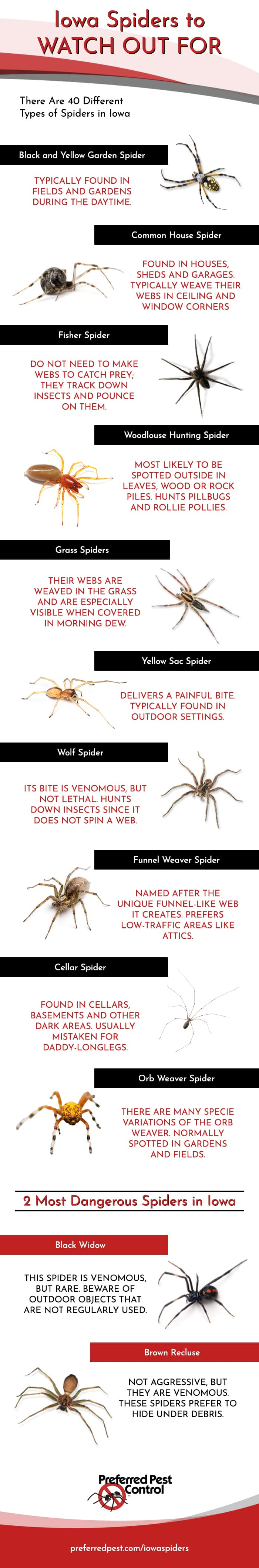 Infographic Common Spiders Found In Iowa Area