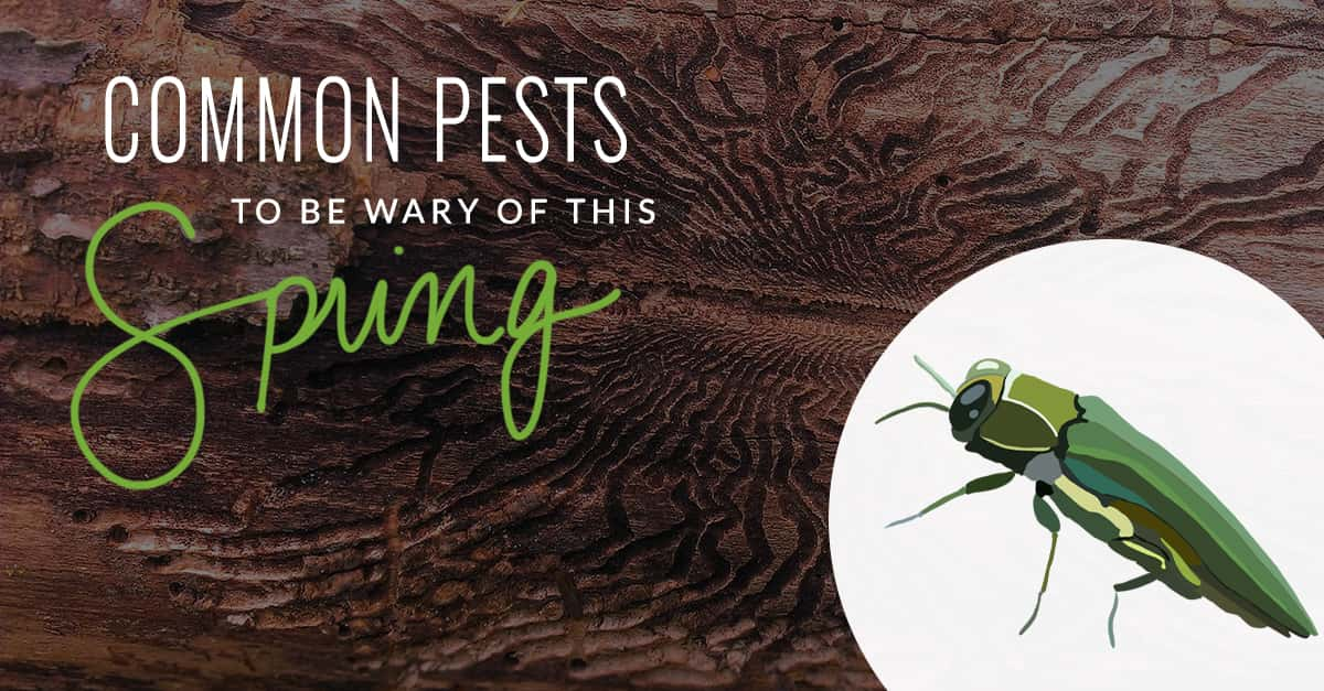 Common Pests to be Wary of This Spring