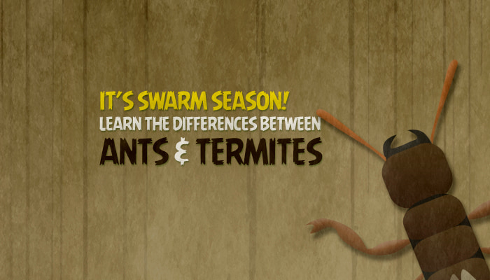Preferred Pest Control Ants and Termites