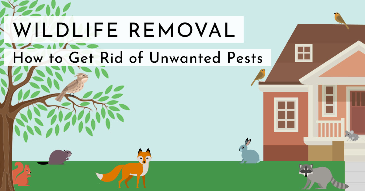 wildlife and animal removal