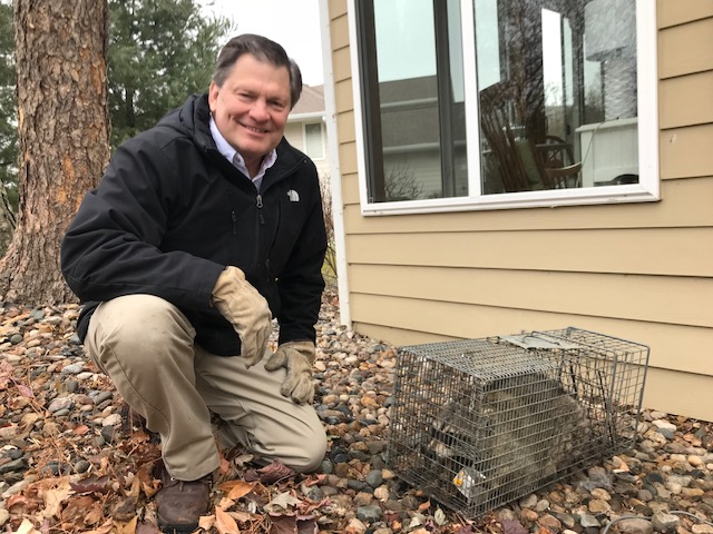 raccoon removal - preferred pest control