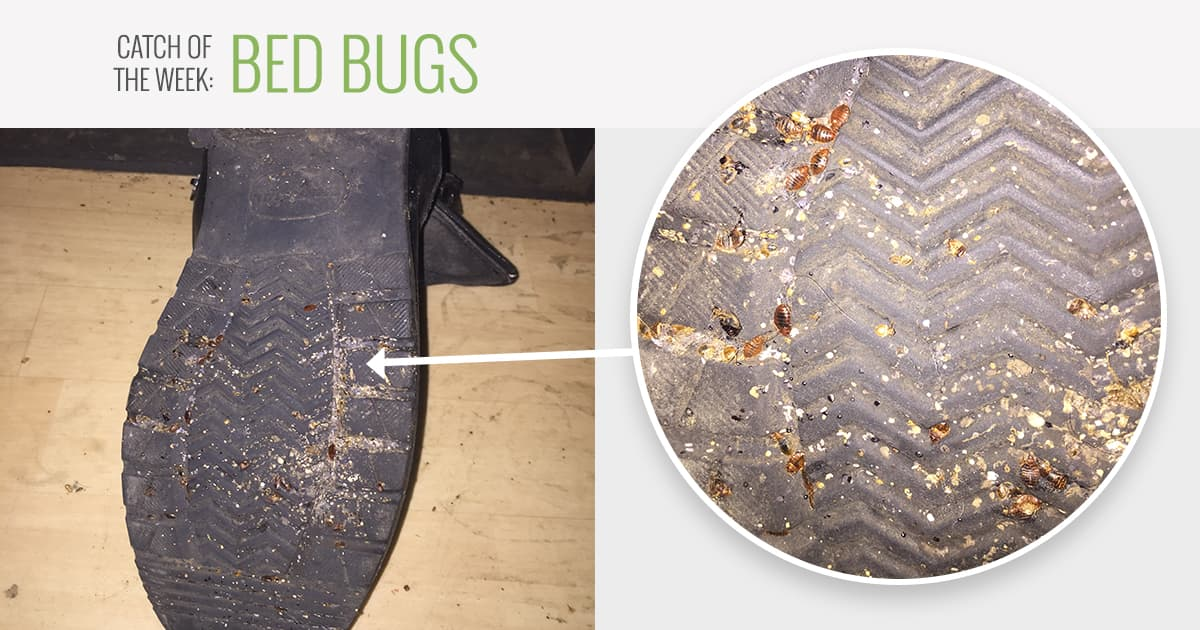 Des Moines Bed Bug Removal