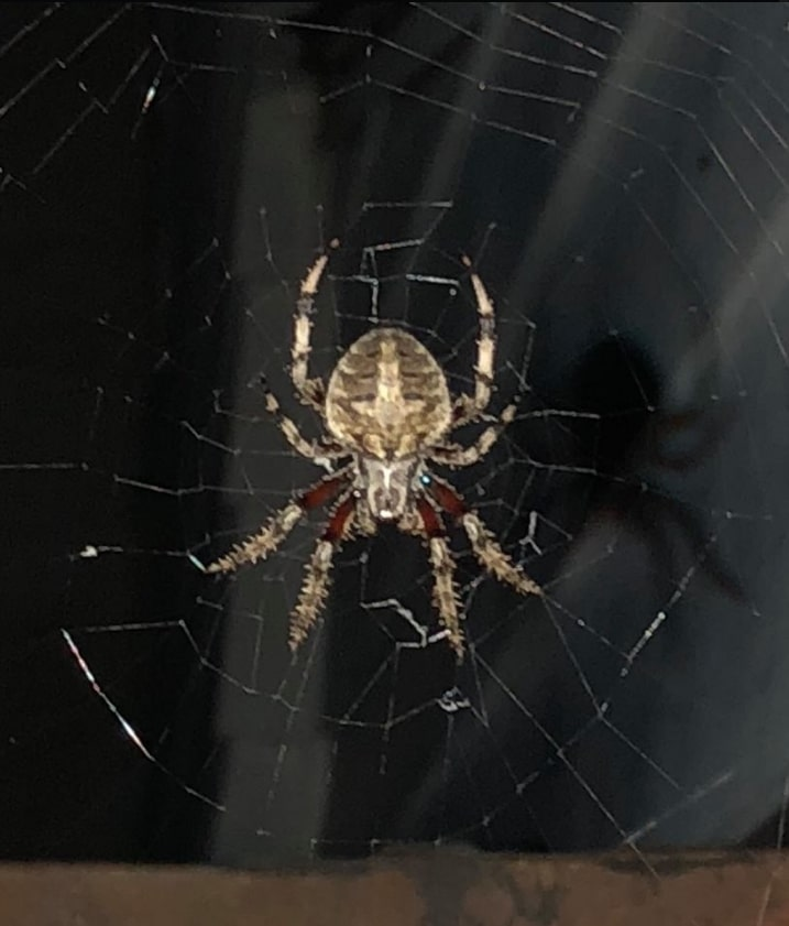 scary spider photo