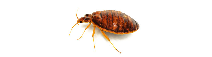 Bed Bug Removal Des Moines Iowa