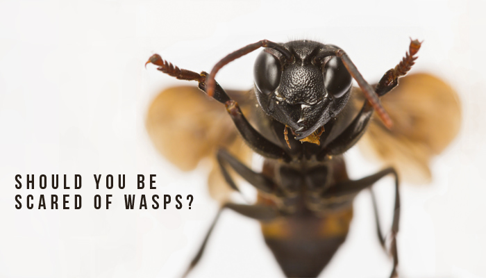 Should You Be Scared of Wasps